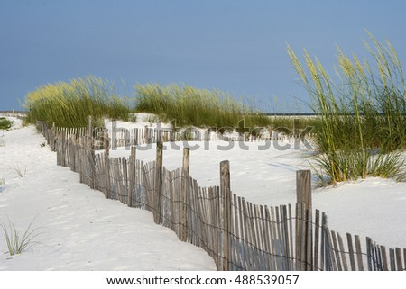 Sand fence among ripe sea oaats helps prevent erosion in dunes on Santa Rosa Island in Pensacola, Florida.