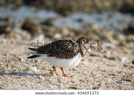 Sand Piper on beach