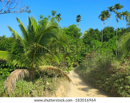 Sand roads between palms at Koh Samui, Thailand
