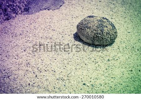 Sand scene with dead sea urchin shell - stock photo