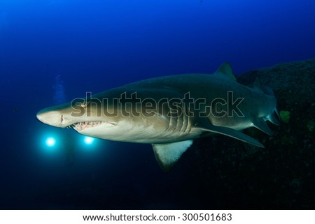 Sand tiger Shark with diver and lights in the background.