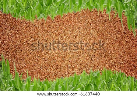 Sand wall and curve grass background