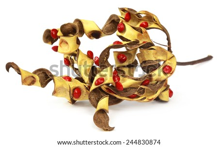 Sandalwood Seeds with dried bean over white background - stock photo