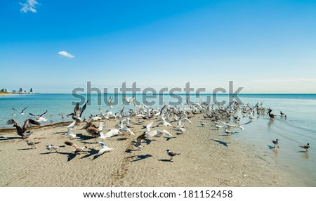 Sandbar with sea birds on beautiful Crandon Park Beach in Key Biscayne in Miami. - stock photo