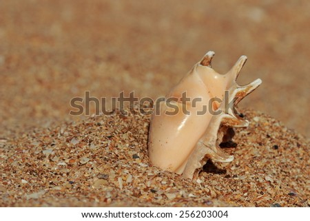 Sandy beach, shells and sand/Close up view beach sand background - stock photo