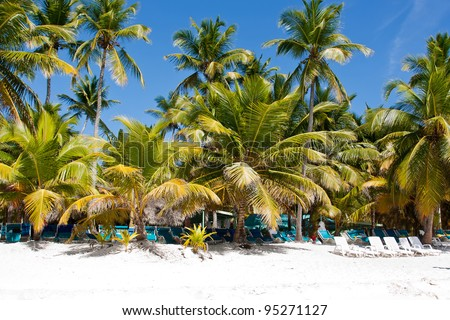 Sandy beach under palm trees on the bank of the tropical sea