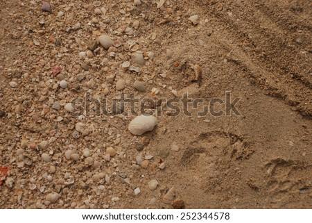 sandy beach with shells - stock photo