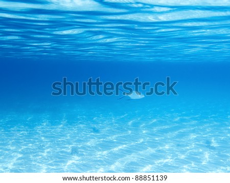 Sandy bottom, surface and fish in blue underwater - stock photo