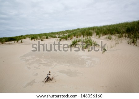 sandy dune with dune grass and a stump at the coastline of Norderney, Germany - stock photo