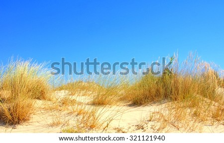 sandy dune with dune grass with a blue sky and room for copy space - stock photo