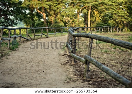 Sandy Forest Path fenced with wooden bars through summer forest - stock photo