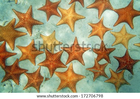 Sandy seabed covered by cushion starfish in the Caribbean sea, natural scene - stock photo