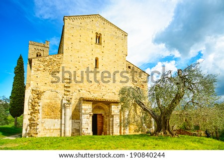 Sant Antimo, Castelnuovo Abate Montalcino church and secular olive tree. Val d Orcia Tuscany, Italy, Europe - stock photo