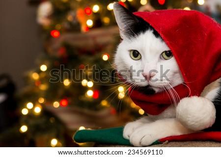 Santa Cat - stock photo