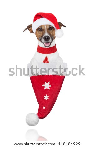 santa christmas dog in a hat with snow flakes