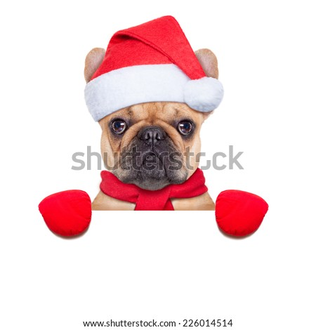 Santa claus christmas dog wearing a hat behind a blank white placard , isolated on white background - stock photo