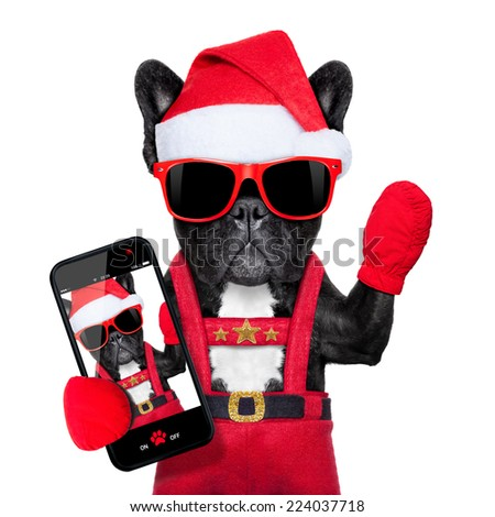 Santa claus christmas dog wearing a hat taking a selfie,  isolated on white background