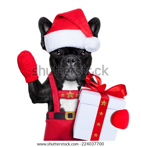 Santa claus christmas dog wearing a hat with a  xmas gift or present for you