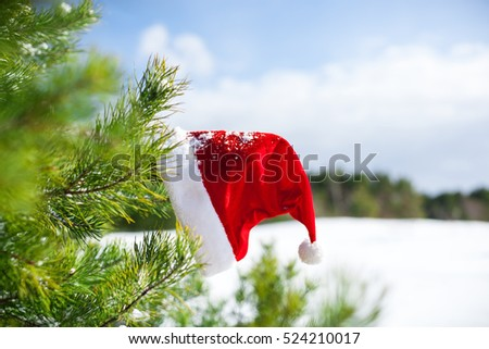 Santa Claus hat on fir tree's branch, Christmas in winter nature, outside