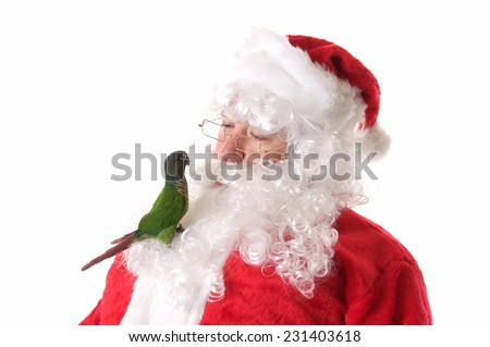 Santa Claus on a White Background with a pet green cheek conure bird.  The bird is sitting in his beard and it looks like they are talking - stock photo