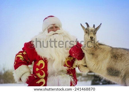 Santa Claus on the outdoors with a goat on a background of nature
