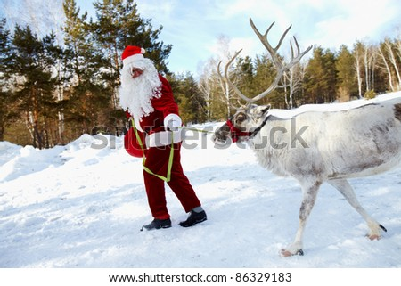 Santa Claus walking in the wood and leading his reindeer - stock photo