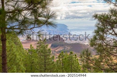 Santa Cruz de Tenerife through pines in Tenerife, Spain. - stock photo
