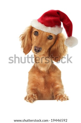Santa dachshund topper. Studio isolated.