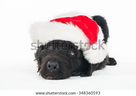 Santa dog on white background