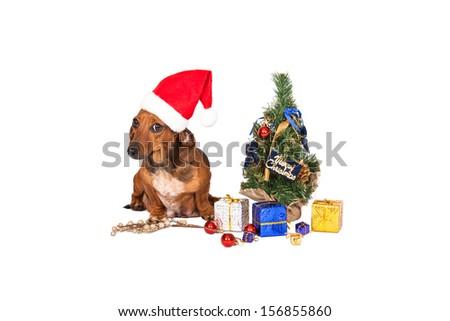 Santa dog with Christmas decorations on white background  - stock photo