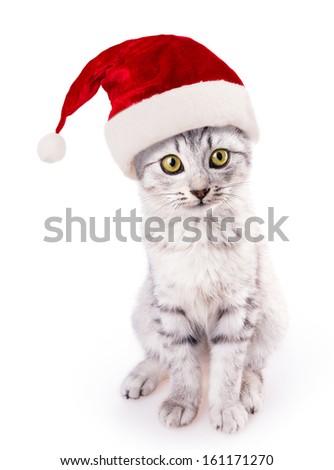 santa hat cat isolated on white background - stock photo