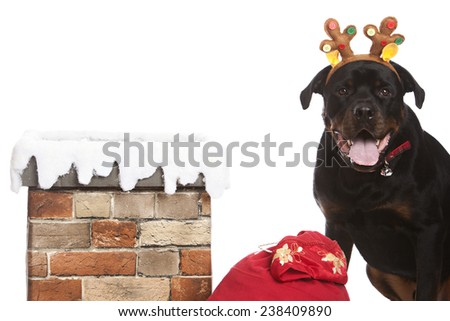 Santa's helper.  Adorable rottweiler wearing a pair of antlers and sitting next to a chimney and Santa's sack.  Isolated on white. - stock photo