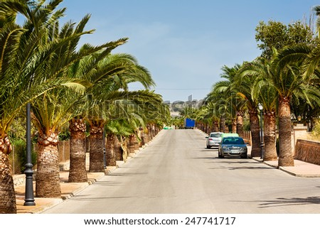 Santanyi, Spain, July 19 2014: deserted palm alley in Santanyi