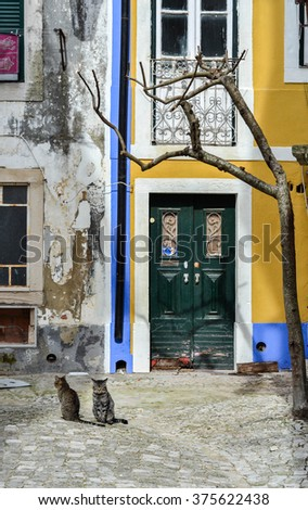 SANTAREM - FEBRUARY 6: Two cats seated on pavement in front antique buildings in Santarem, Portugal on February 6, 2016