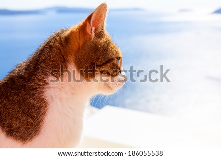 Santorini island with cat in Greece - stock photo