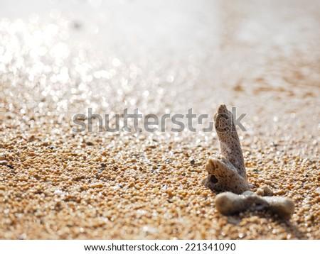 Sanur Beach - stock photo