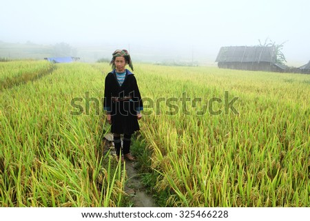 SAPA, VIETNAM - SEP 4: Hmong woman farmer go home on terrace rice fields on mountain in the rain at September 4, 2015 in Sapa, Lao Cai, VIetnam.