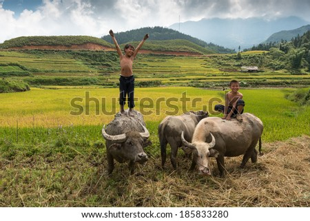 SAPA, VIETNAM - September 15: two unidentified local children ride buffalo on September 15, 2013 in Sapa, Vietnam. Riding buffalo is a fun of local children in Sapa, Vietnam. - stock photo
