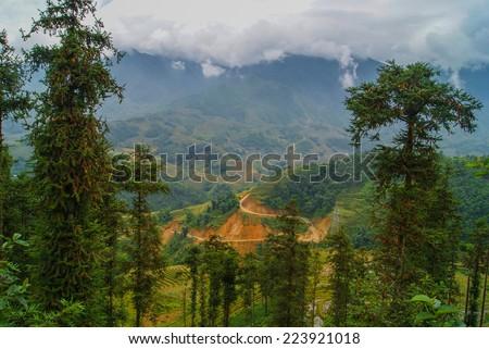 Sapa, Vietnam. Trees on the slopes of the mountains. - stock photo