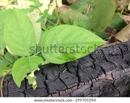 sapling and charcoal ,conservative environmental concept - stock photo