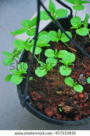 Sapling growing into pot - stock photo