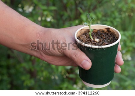 Sapling in cup coffice recycle, hand holding coffice recycle with sapling , save world - stock photo