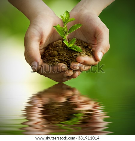 sapling in hands with reflection in water - stock photo