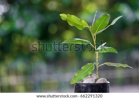 sapling with stones in a coffee cup on a wooden board background bokeh tree using wallpapers and backgrounds.