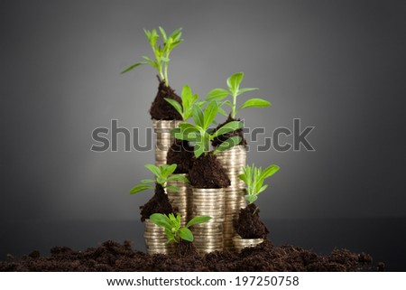 Saplings on stack of coins at desk against black background - stock photo