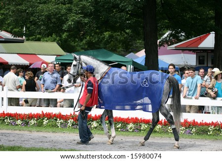 SARATOGA SPRINGS - August 9: An Unidentified Groom walks Stud Muffin to the Paddock before the Solomon Northup Stakes August 9, 2008 in Saratoga Springs, NY.
