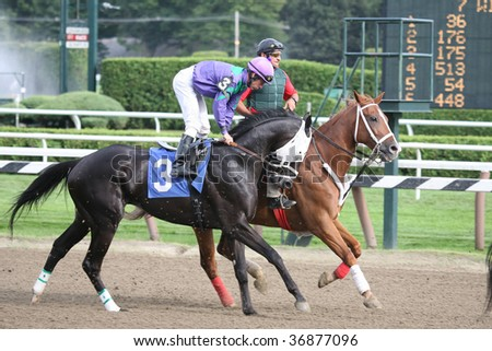 "SARATOGA SPRINGS, NY- AUG 28: ""Vamel"" with Micheal Luzzi in the post parade for the 8th race at Saratoga Race Track, August 28, 2009 in Saratoga Springs, NY. - stock photo"