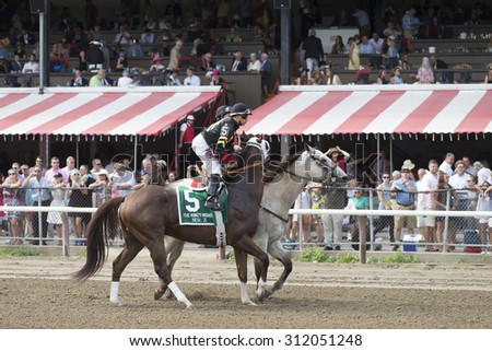 SARATOGA SPRINGS, NY - August 29, 2015: Mr. Z in the Post Parade for the King's Bishop Stakes on Travers Day at Historic Saratoga Race Course on August 29, 2015 Saratoga Springs, New York - stock photo