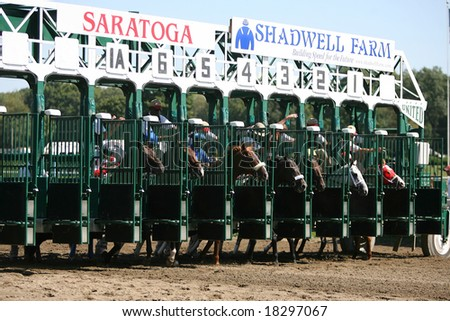 SARATOGA SPRINGS - September 1: The Gate Opens and Their off in the Third Race on September 1, 2008 in Saratoga Springs, NY. - stock photo