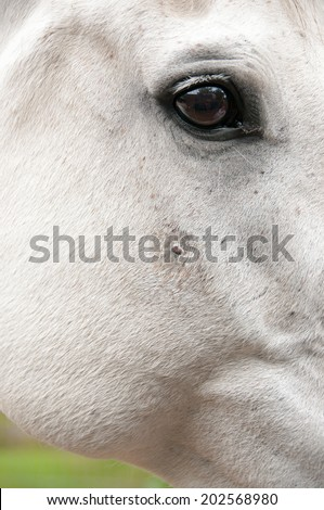 Sarcoid - Skin tumour  - stock photo
